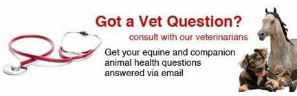 Vet Questions answered here