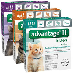 Advantage Cats