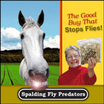 Spalding Fly Predators